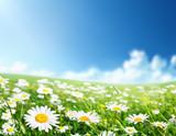 Es primavera en mialma