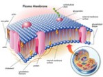 aprender de las células