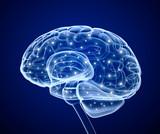 Nuestro increible cerebro