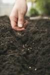 loa vida planta las semillas