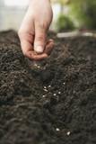 Las semillas de lavida