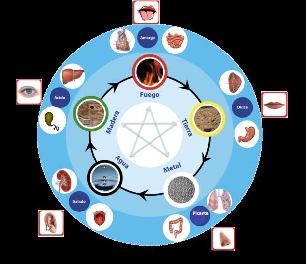 ¿Qué es la Medicina Tradicional China(MTC)?