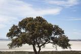 El árbol comometáfora