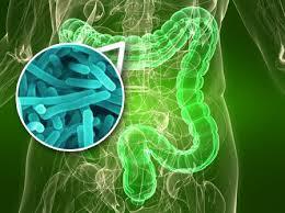 Consejos para una flora intestinalsana