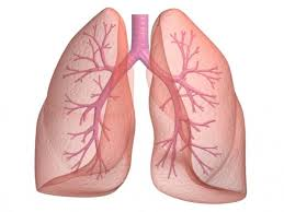 ventilamos con los pulmones