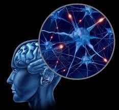 Alimentos y neuronas