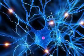 Estilo de vida y neuronas
