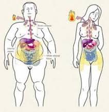 distribución de las grasas